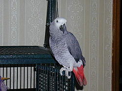 Speaking of parrot's, who know's about owning one.-bleep_door.jpg