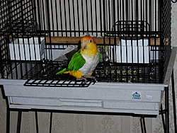 Speaking of parrot's, who know's about owning one.-mel_door.jpg