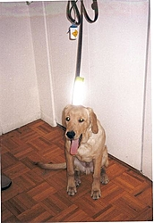 OT: Get another guide dog or ????-barney.jpg