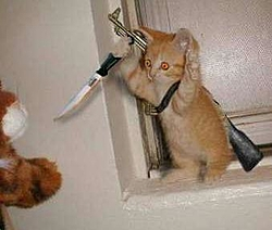 Cat Killer Locked OUT What's  Up With That-killer-cat.jpg