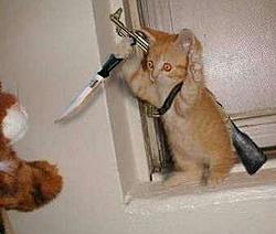 Cat Chaser or Cat Killer?-killer-cat.jpg