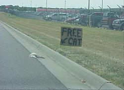 Apology to OSO-free-cat.jpg