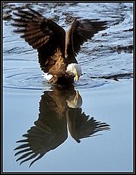 Never Forget...-eagle.jpg