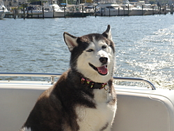 DOG's and BOATS, All PAWS on deck.-misc-08-001.jpg