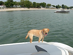 DOG's and BOATS, All PAWS on deck.-n172000039_33977374_694.jpg