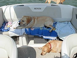 DOG's and BOATS, All PAWS on deck.-n172000039_33977375_933.jpg
