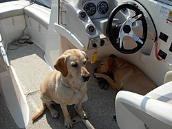 DOG's and BOATS, All PAWS on deck.-n172000039_33977381_2417.jpg