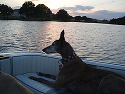 DOG's and BOATS, All PAWS on deck.-isis-sunset.jpg