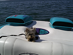 DOG's and BOATS, All PAWS on deck.-imgp3137.jpg