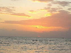 A few pic of News Year trip to Keys in Tiger-050.jpg