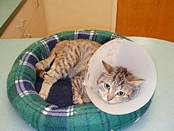 Update on Gina the miracle kitten!-136.jpg