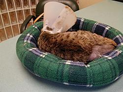 Update on Gina the miracle kitten!-137.jpg
