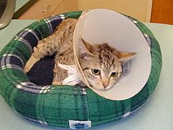 Update on Gina the miracle kitten!-139.jpg
