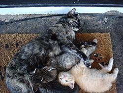 Update on Gina the miracle kitten!-dsc01137.jpg