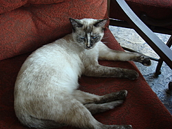 Update on Gina the miracle kitten!-dsc01138.jpg