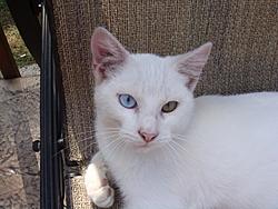 Update on Gina the miracle kitten!-dsc01142.jpg