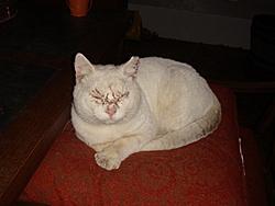 Update on Gina the miracle kitten!-dsc01259.jpg