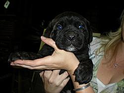 Need a guard dog/boat protector?-6weeks-005.jpg