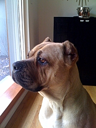 Need a guard dog/boat protector?-photo-2.jpg