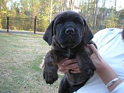 Need a guard dog/boat protector?-8-weeks-008.jpg