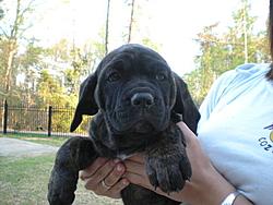 Need a guard dog/boat protector?-8-weeks-009.jpg