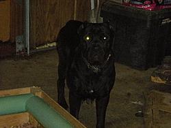 Need a guard dog/boat protector?-005.jpg
