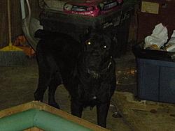 Need a guard dog/boat protector?-006.jpg
