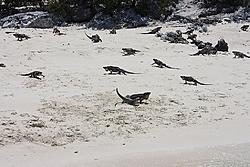 Bobthebuilder's next adventure - Part 1, Ft Lauderdale to Turks & Caicos-aimg_0796.jpg