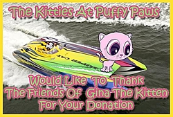 Gina the kitten update and A great cause!-friends-gina.jpg