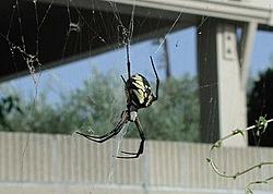 Holy Scarry spiders batman!!!-archieii-640x480.jpg