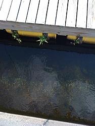 Lake Champlain 2009-photo-2-.jpg