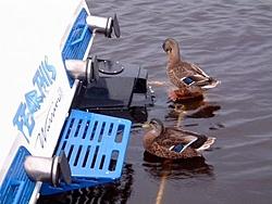 Attention ALL SOUTHEAST Boaters...-dscf0034.jpg