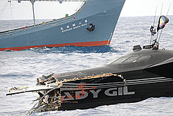 Butzi's Earth Race Boat, Becomes Anit Whaling Vessel-whale.jpg