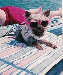 Dogs That Boat-murphy.jpg
