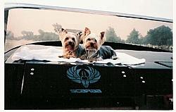 Dogs That Boat-murph-duffy.jpg