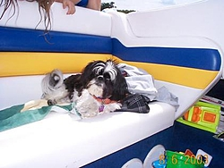 Dogs That Boat-dcp01980.jpg