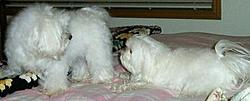 Dogs That Boat-girls.jpg