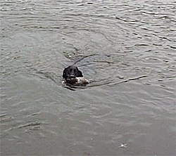 Dogs That Boat-dixie-dog.jpg
