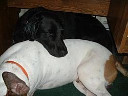 Dogs That Boat-dscf0005.jpg