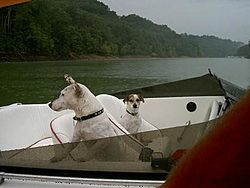 Dogs That Boat-pict1618.jpg