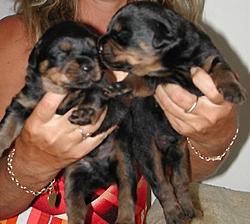 OT - I'm a daddy - Rottweilers-day-eleven-iii.jpg
