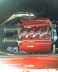 Corvette Cat - Destin, FL-z044_06.jpg