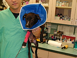 Remember Gina the Miracle kitten?-mercedes-pup-2.jpg