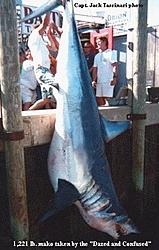 WARNING! Boaters told to be alert for sharks off Northeast-shark_htm_txt_1221_makohanging.jpg