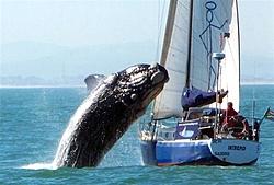 Whale vs. Sailbote-ss-100721-whale-02_grid-8x2.jpg