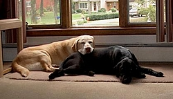 OT: The Dog is Gone-im000147-2-.jpg
