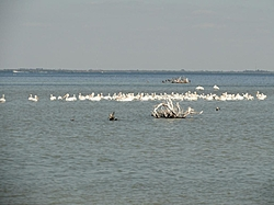 Oct, boating in paradise, SW Florida-dsc00259-1824-x-1368-.jpg