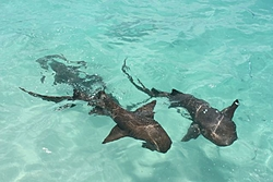 Have you ever had a big shark swim by your boat?-img_0888.jpg