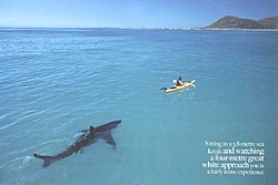 Have you ever had a big shark swim by your boat?-great-white-sea-kayak_2.jpg