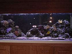 My applolgy to APBA.-aquarium-002.jpg